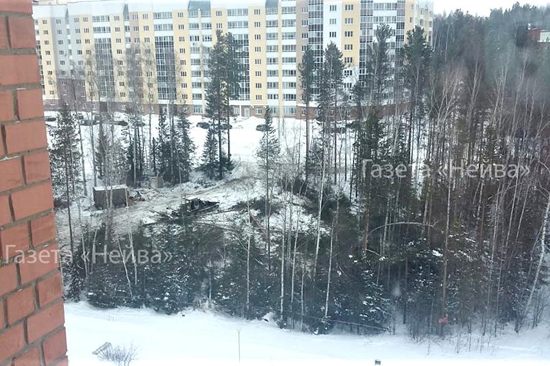 На ФОК — идёт вырубка леса, на «горнолыжке» — простой